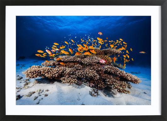 Marine Life - Barathieu Gabriel ingelijste print