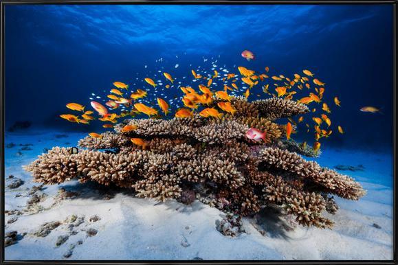Marine Life - Barathieu Gabriel ingelijste poster