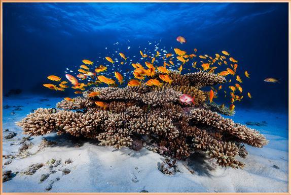Marine Life - Barathieu Gabriel affiche sous cadre en aluminium