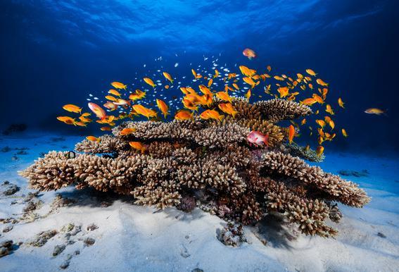 Marine Life - Barathieu Gabriel acrylglas print
