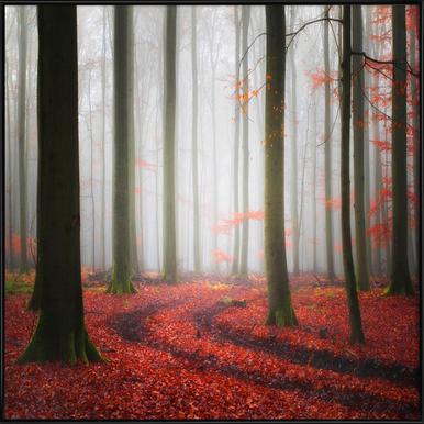Autumnal Tracks - Carsten Meyerdierks Framed Poster