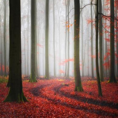 Autumnal Tracks - Carsten Meyerdierks toile