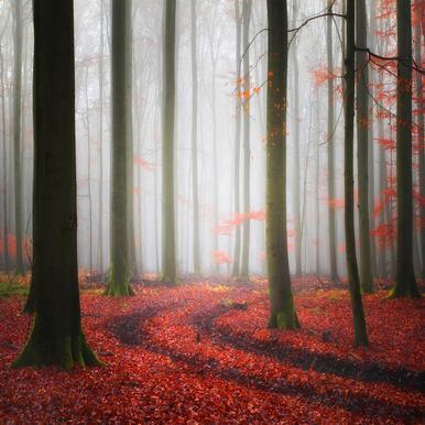 Autumnal Tracks - Carsten Meyerdierks tableau en verre