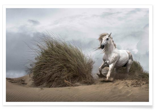 White Stallion on the Beach - LucieBressy affiche