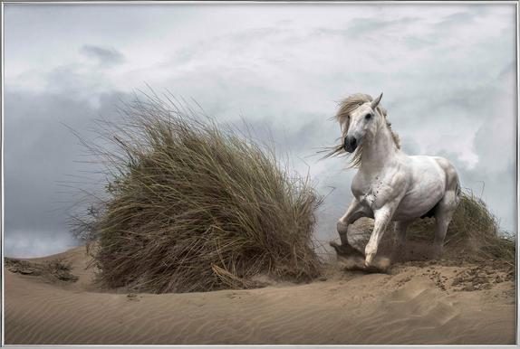 White Stallion on the Beach - LucieBressy poster in aluminium lijst