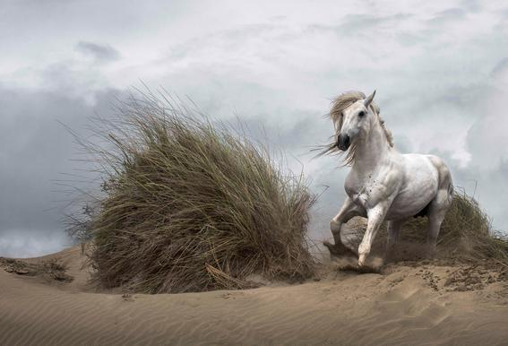 White Stallion on the Beach - LucieBressy Aluminium Print