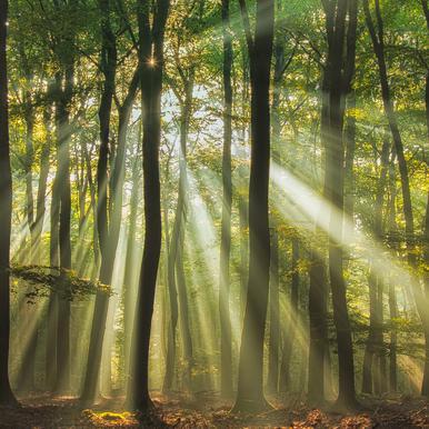 Sunny Start to the Day ........ - Piet Haaksma Aluminium Print