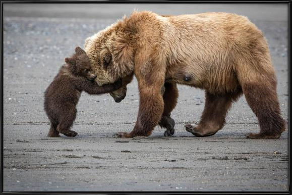 A Little Bear Hug - Renee Doyle ingelijste poster