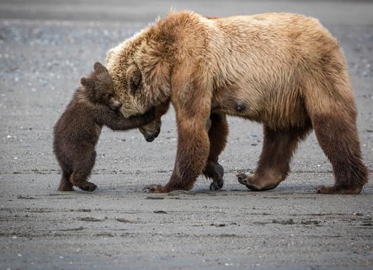 A Little Bear Hug - Renee Doyle canvas doek