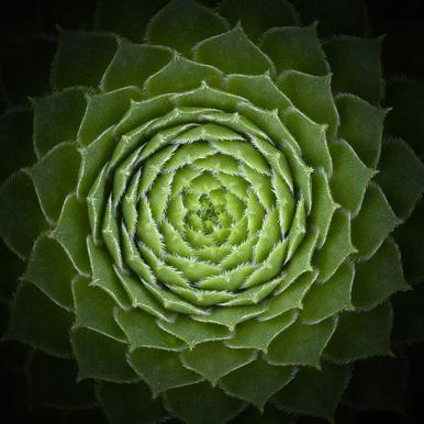 Succulent - Victor Mozqueda Impression sur alu-Dibond