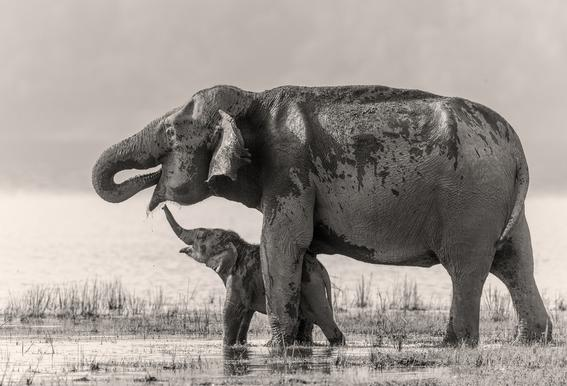 A Touching Moment - Jagdeep Rajput acrylglas print