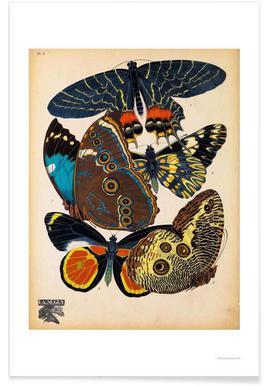 Butterflies Plate 10, E.A. Seguy Poster
