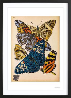 Butterflies Plate 11, E.A. Seguy ingelijste print