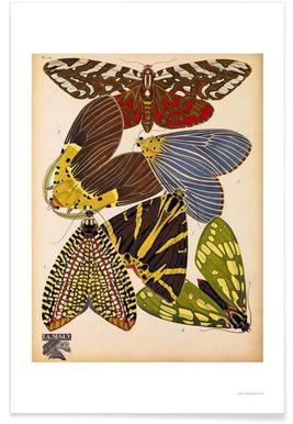 Butterflies Plate 5, E.A. Seguy