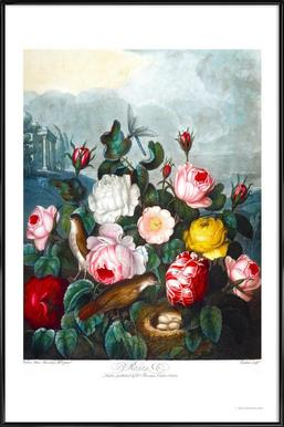 Roses by Thornton ingelijste poster