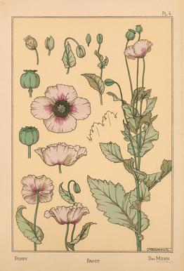 Eugene Grasset - Poppy 04