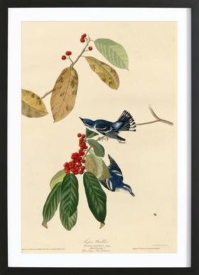 Azure Warbler -Bild mit Holzrahmen