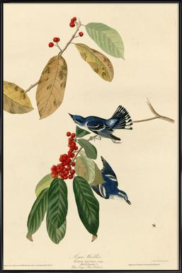 Azure Warbler Framed Poster