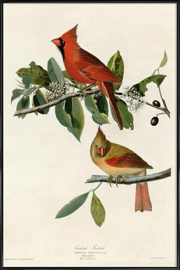 Cardinal Grosbeak Framed Poster