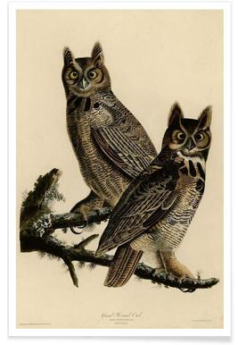 Great Horned Owl -Poster