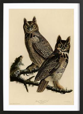 Great Horned Owl Poster i träram