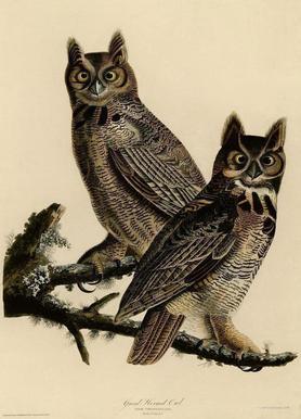 Great Horned Owl -Leinwandbild
