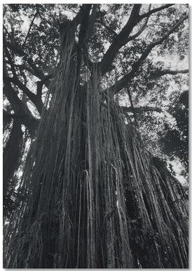 Curtain Fig Tree Notebook