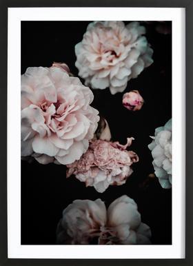 Crisp Pink Framed Print