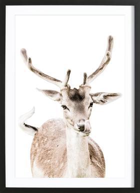 Deer I Framed Print