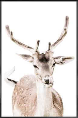 Deer I Framed Poster