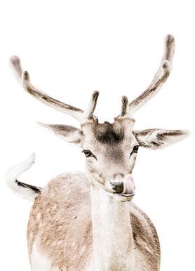 Deer I Canvas Print