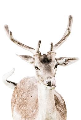 Deer I Aluminium Print