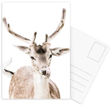 Deer I Postcard Set