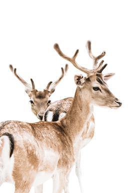 Deers II Acrylic Print