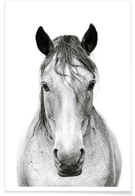 Horse I Poster