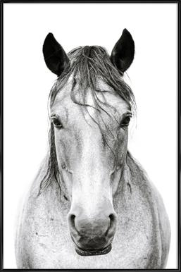 Horse I Framed Poster