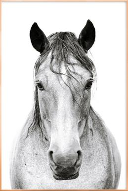 Horse I Poster in Aluminium Frame