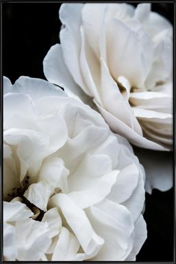 White Roses Framed Poster