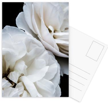 White Roses Postcard Set