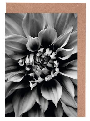Petal II Greeting Card Set