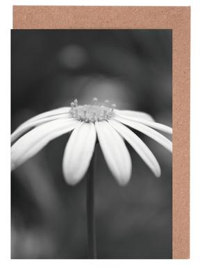 Daisy Greeting Card Set