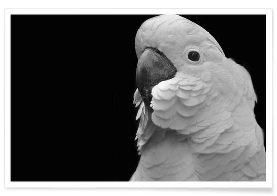 White Cockatoo -Poster