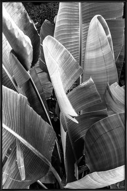 Palms - Affiche sous cadre standard