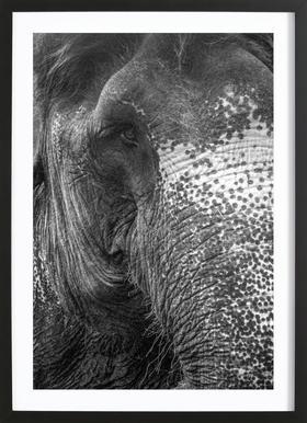 Elephant affiche sous cadre en bois