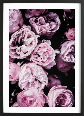 Pink Flowers III