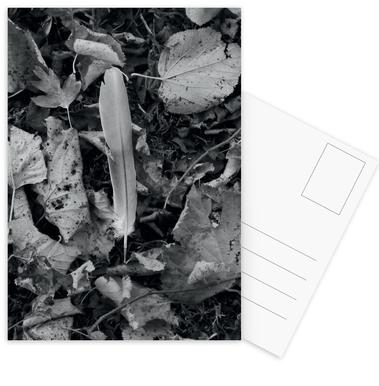White Feather Postcard Set
