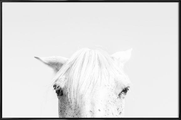 White Horse Framed Poster