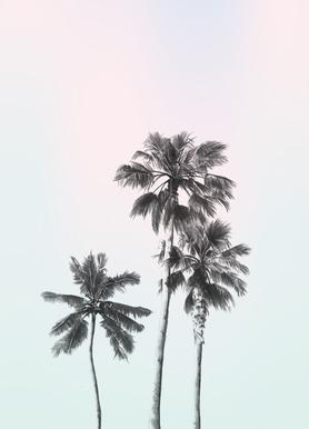 Three Palms -Leinwandbild