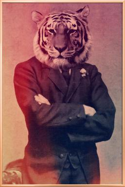 Old Timey Tiger poster in aluminium lijst