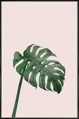 Tropical No. 7